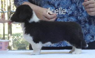 Arielle-1