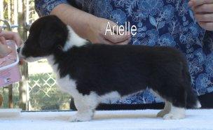 Arielle-2