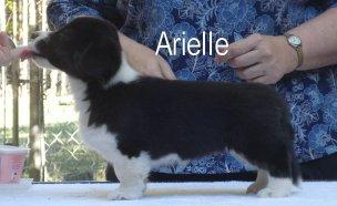 Arielle-3