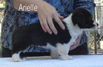 Arielle-R-side