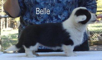 Belle-R-side-1