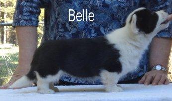 Belle-R-side-2