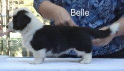 Belle-side-1