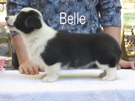 Belle-side-4