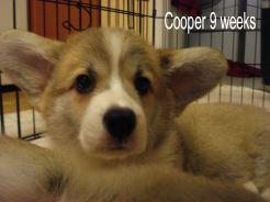 Cooper 10