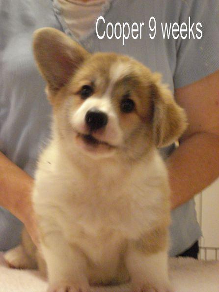 Cooper 4