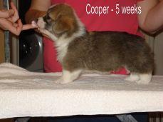 Cooper-5