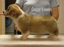 Cooper 6