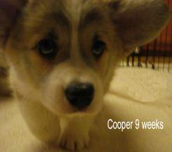 Cooper 9