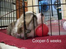 Cooper-9