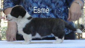 Esme-1