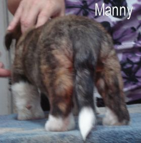 Manny- rear