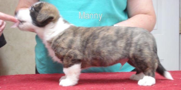 Manny- side