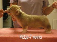 Midge-2