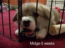 Midge-5