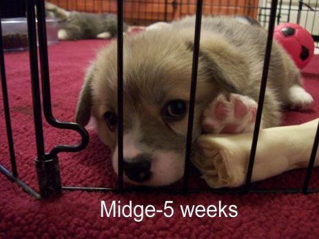Midge-6