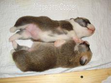 Midge and Cooper 1