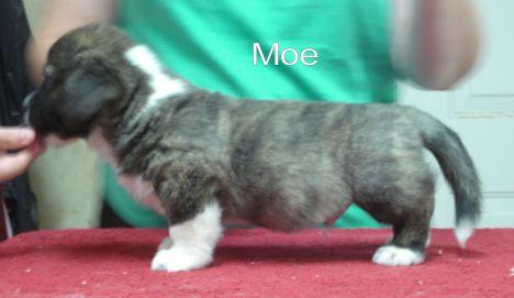 Moe- side