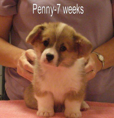 Penny-7