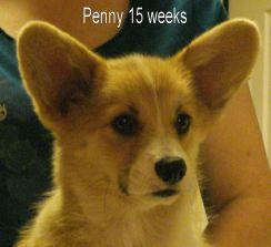 Penny-7b