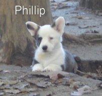 Phillip-1