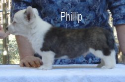 Phillip-side