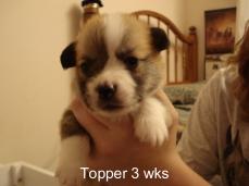 Puppies 11-07 21 days-09