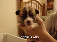 Puppies 11-07 21 days-11