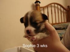 Puppies 11-07 21 days-12