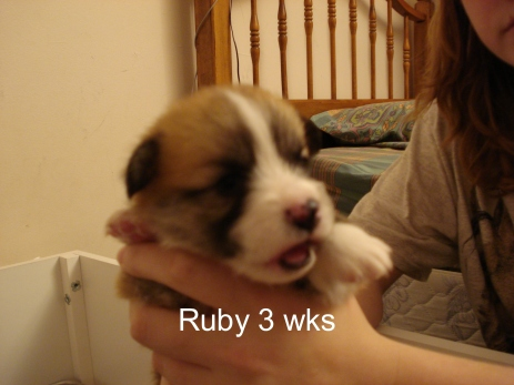 Puppies 11-07 21 days-20