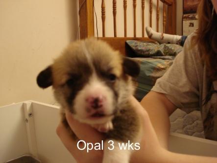 Puppies 11-07 21 days-25