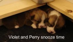 Puppies 11-07 21 days-29