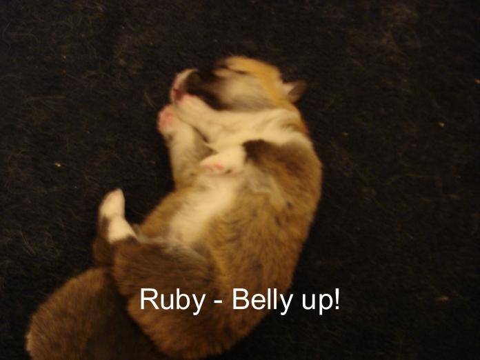 Puppies 11-07 21 days-31