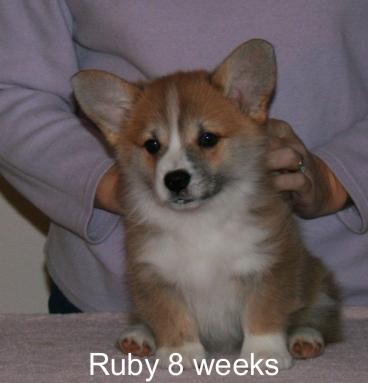 Ruby-head
