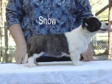 Snow-R-side