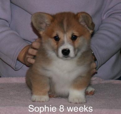 sophie-head