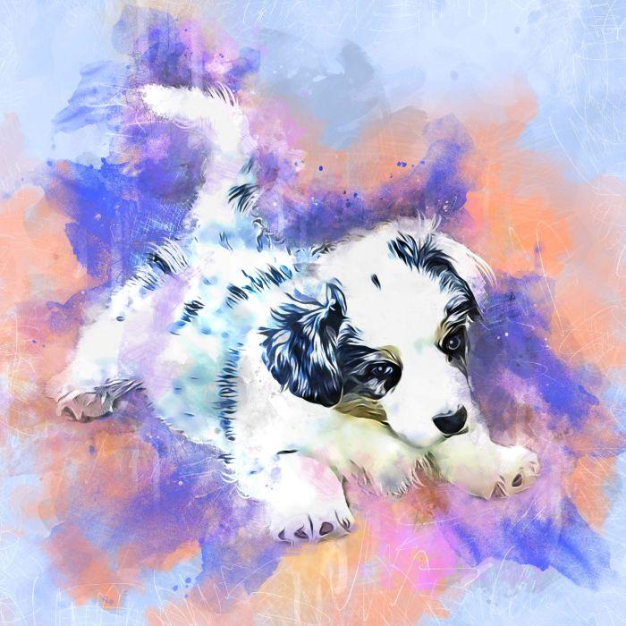 Austin- puppy
