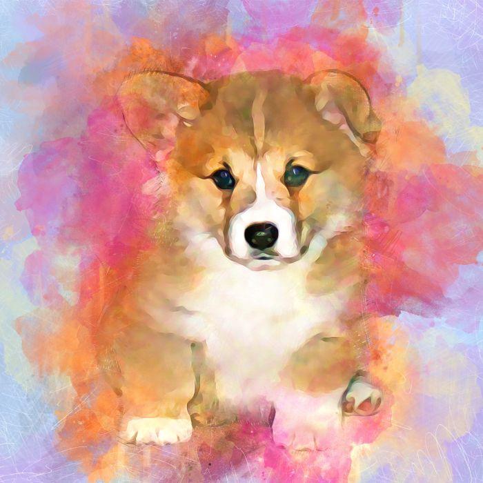 Sophie-puppy
