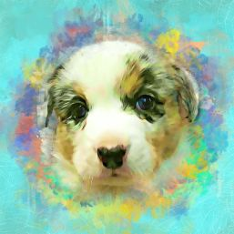 Truman - Puppy
